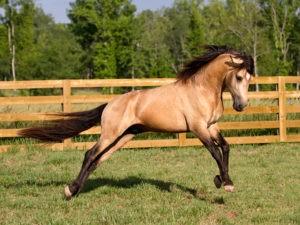 лошадь в солнечный день