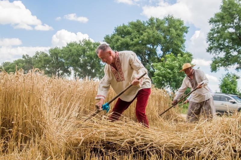мужчины в пшенице