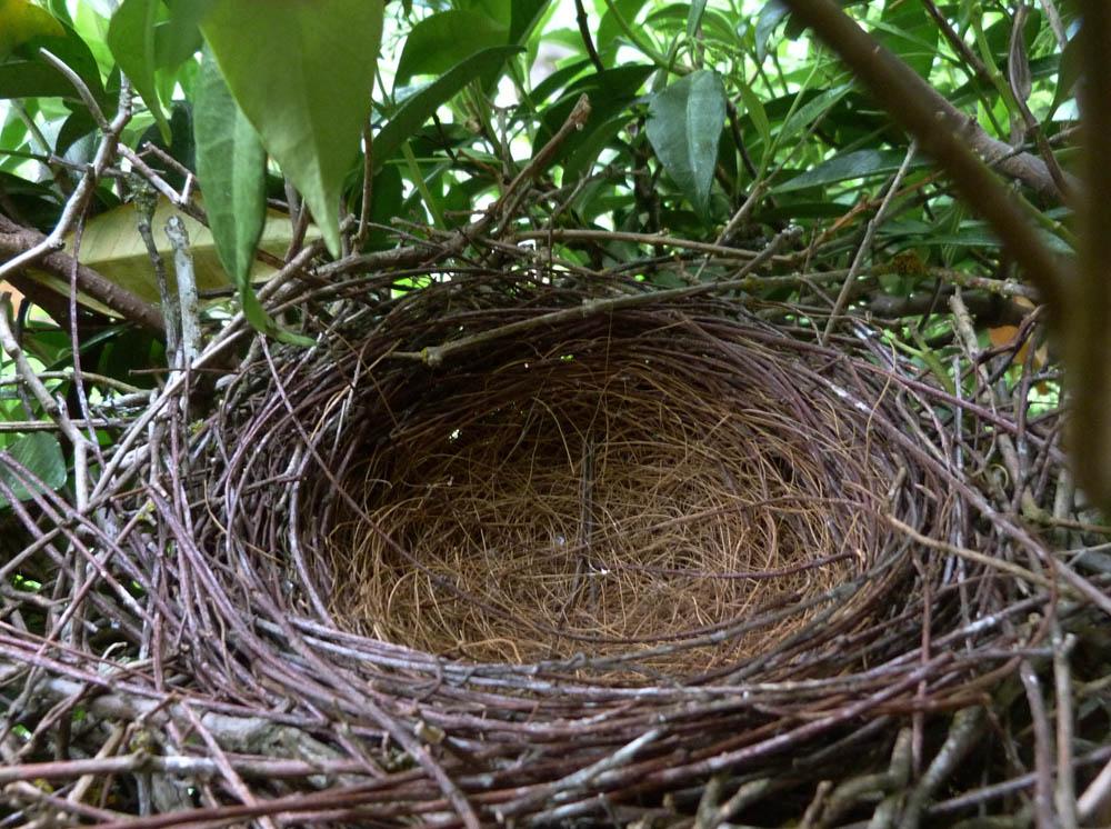 на дереве стоит гнездо