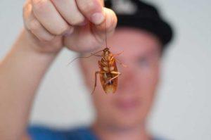 таракан в руках