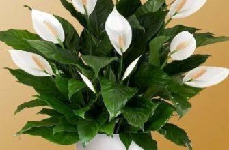 цветок стоит на полу