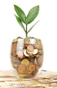 цветок стоит в деньгах