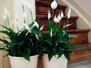 цветок стоит возле лестницы