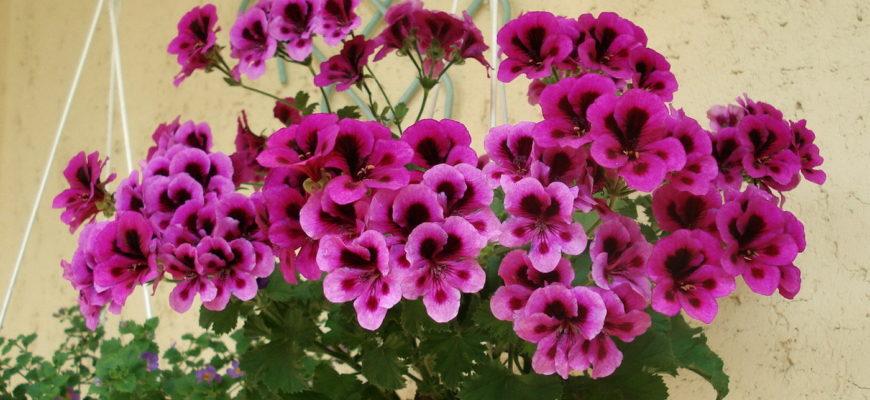 цветок в кашпо