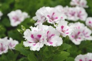 цветок в период цветения
