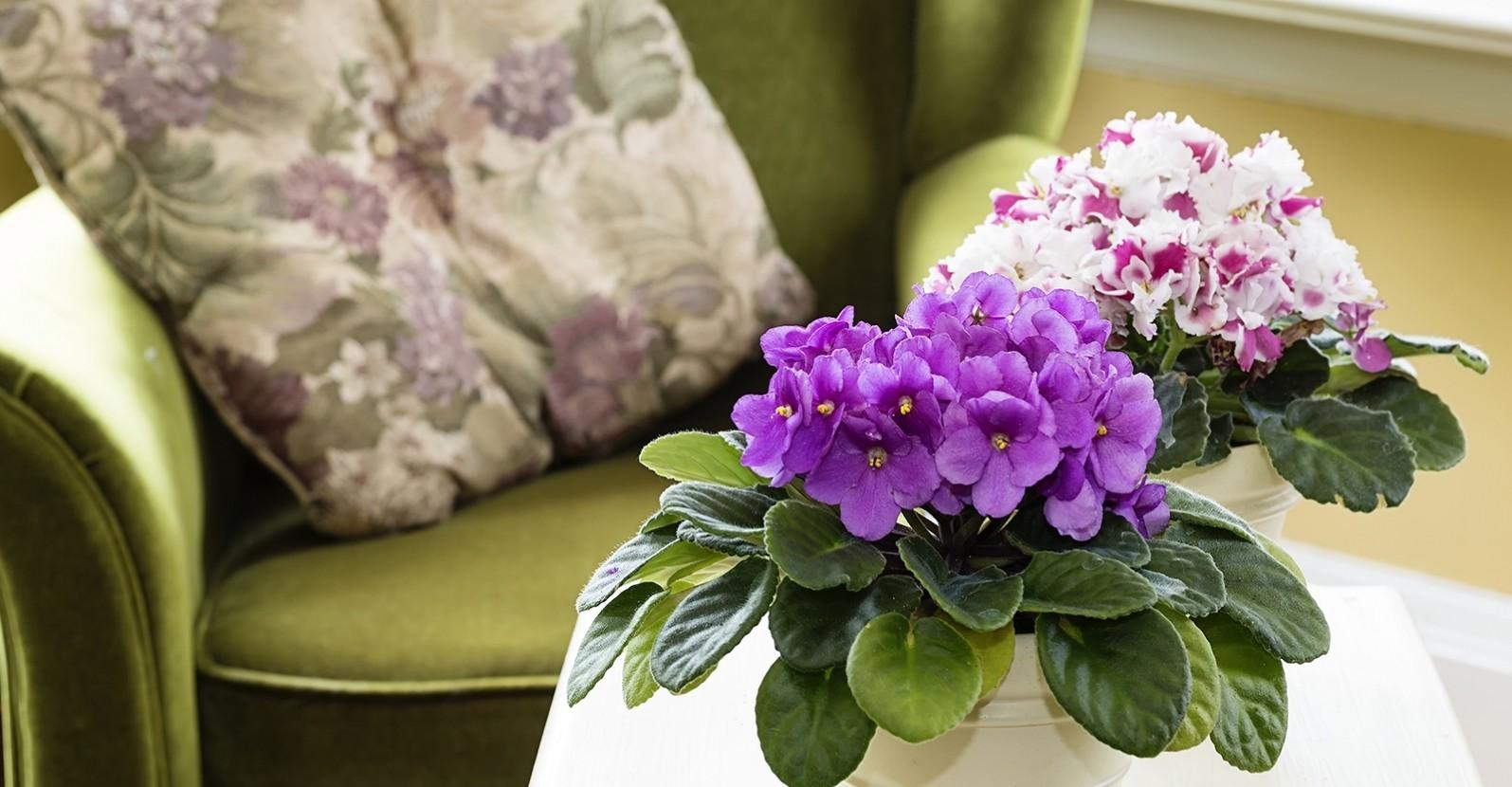 цветы стоят возле кресла