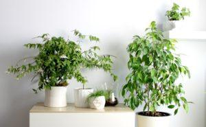 цветы зеленые стоят дома