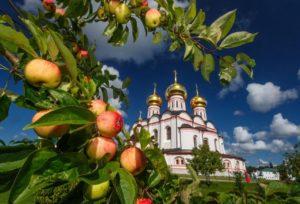 яблоня на фоне церкви