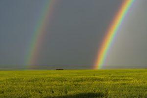 закат над полем после дождя