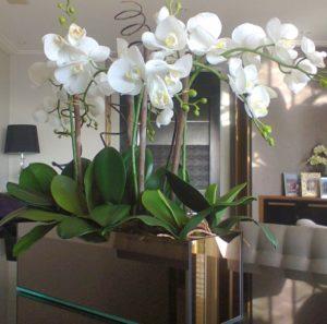 белая орхидея в прямоугольном горшке