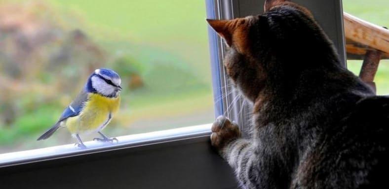 кот смотрит на птицу