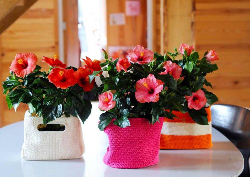 красивые кашпо для цветов