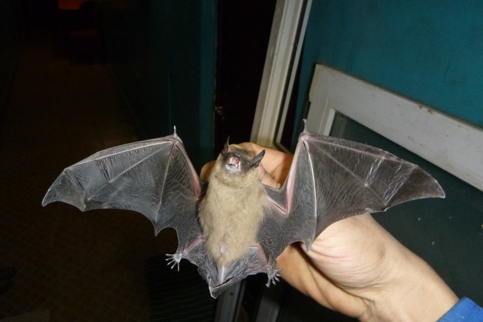 летучая мышь в руке