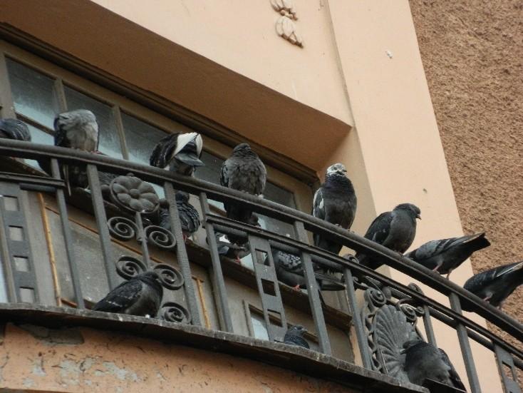 много птиц сидит на балконе