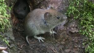 мышь на земле