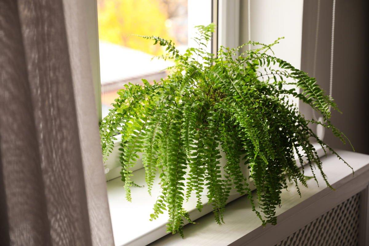 папоротник на окне