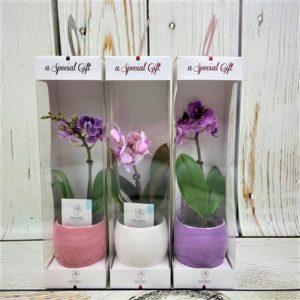 подарить цветок в упаковке