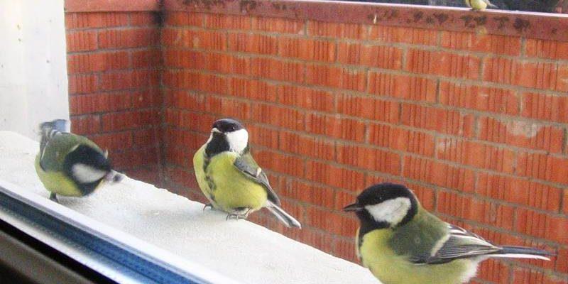 птицы сидят на балконе квартиры