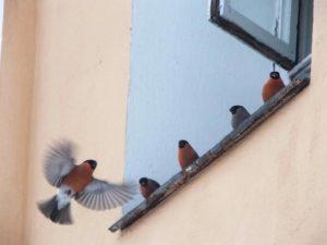 птицы возле дома
