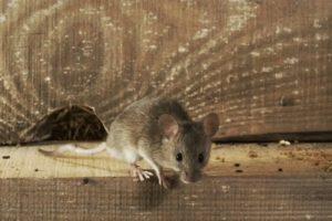 серая мышка на доске