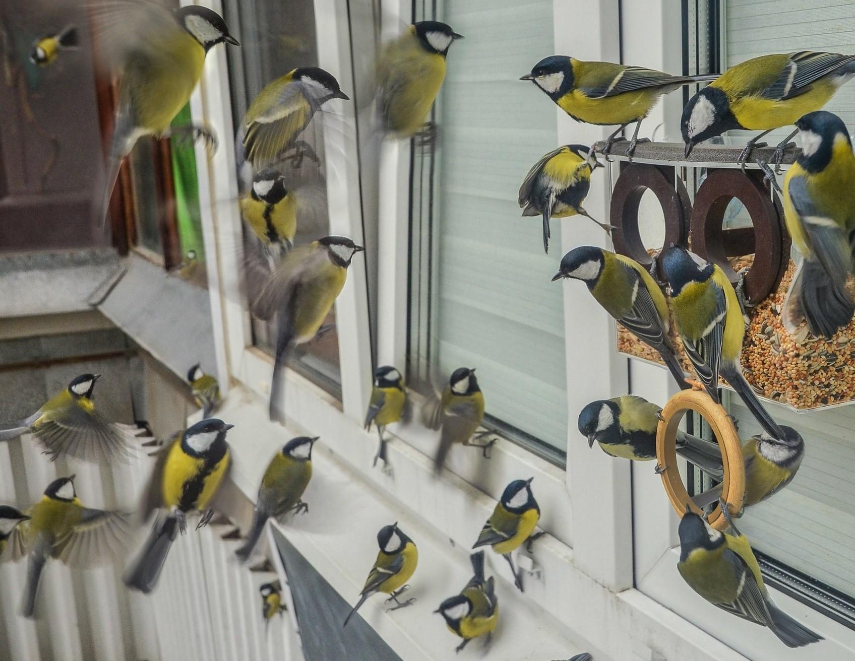 стая птиц на балконе кушает с кормушки