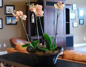 цветок в гостиной комнате
