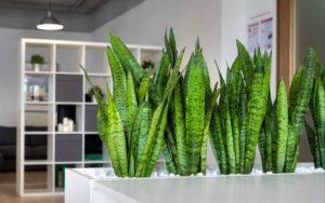цветок в офисе