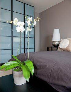 цветок в спальне