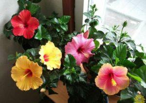 цветущий цветок