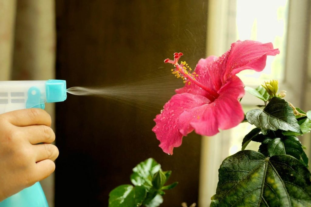 вода на цветке