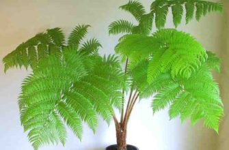 зеленый цветок в виде дерева
