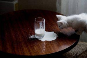 котенок лезет на стол