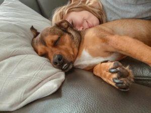 собака лежит на подушке