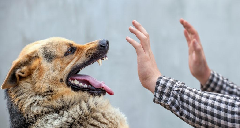 собака злится на человека