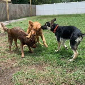три собаки на траве