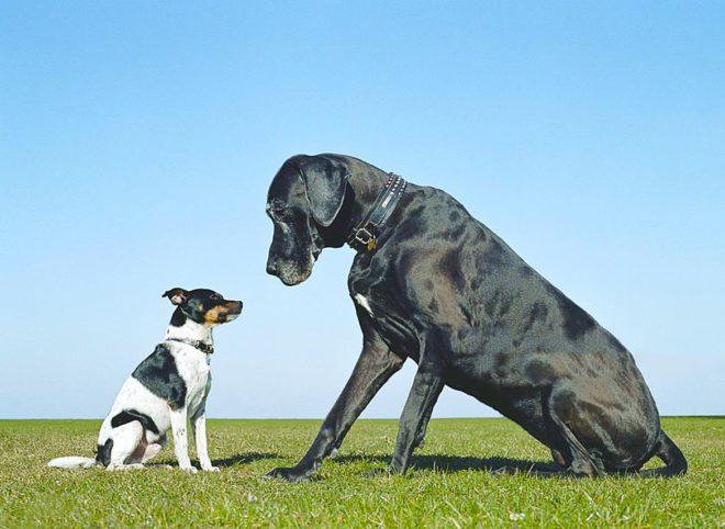 две собаки сидят