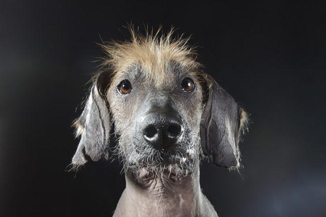 интересная собака