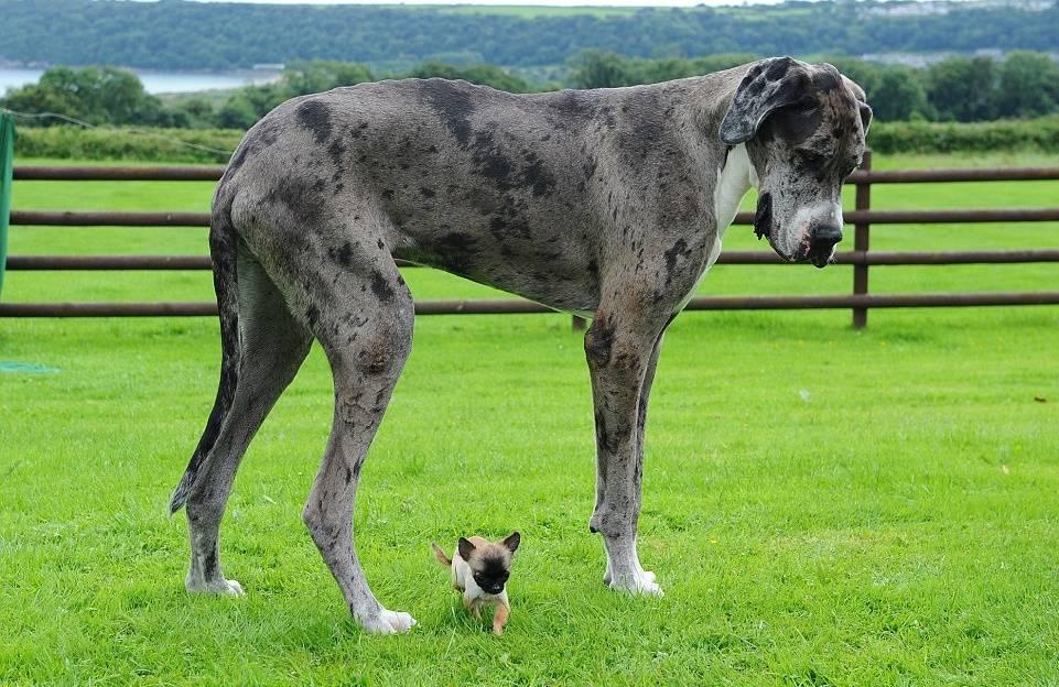 собака черная стоит на траве