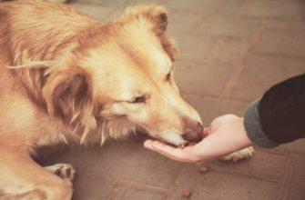 собака кушает с руки человека