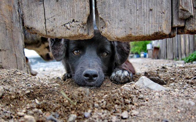 собака под калиткой