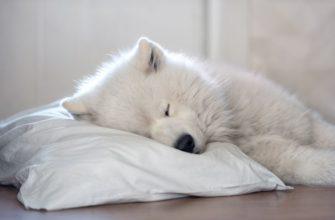 собака спит на подушке